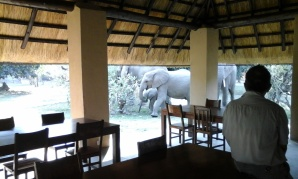 Elephants strolling through the campsite!